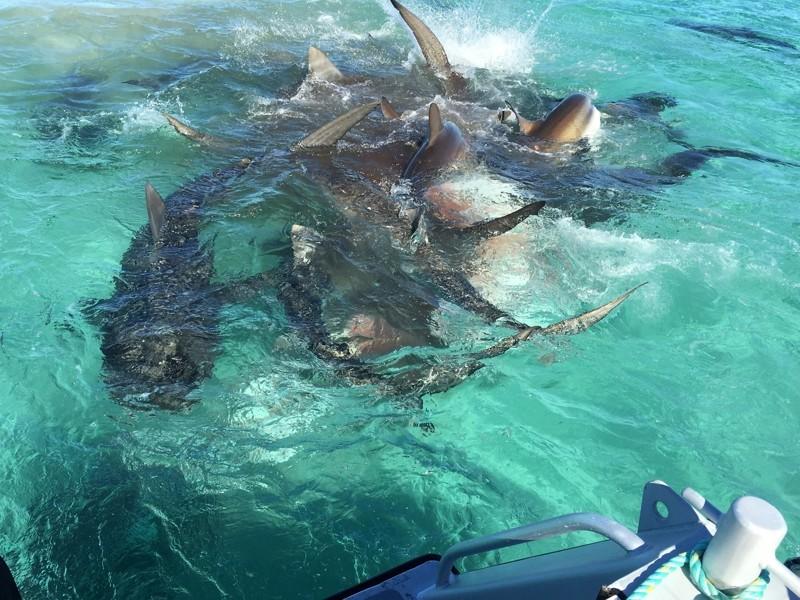 15 причин, почему Австралия - бесконечное приключение  австралия, животные, особенность