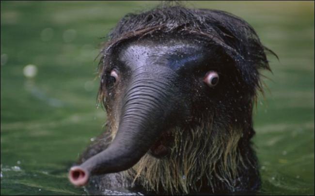 20.  животные, забавные зверушки, фото