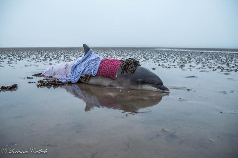 Лоррейн и Майк сразу направились к дельфину  дельфин, животные, спасение