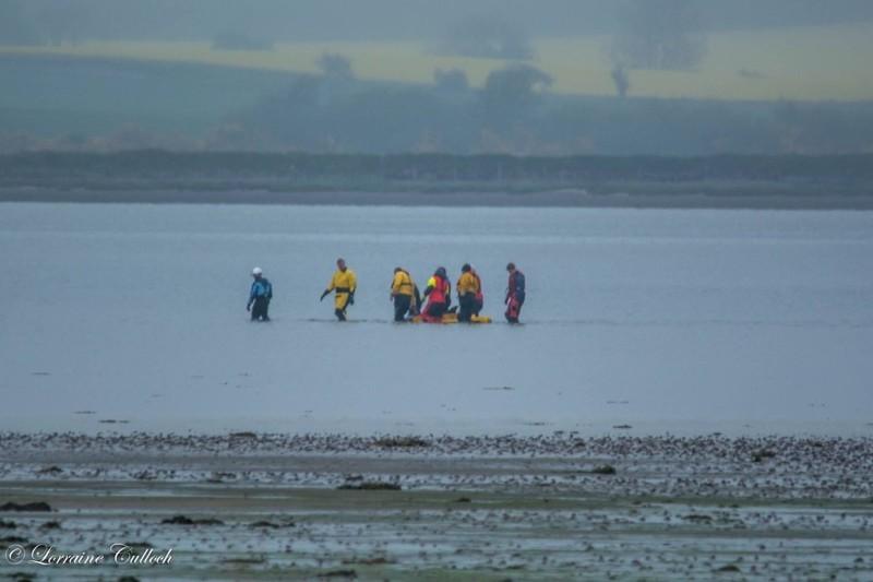 Спасатели были с животным в течение 10 часов  дельфин, животные, спасение