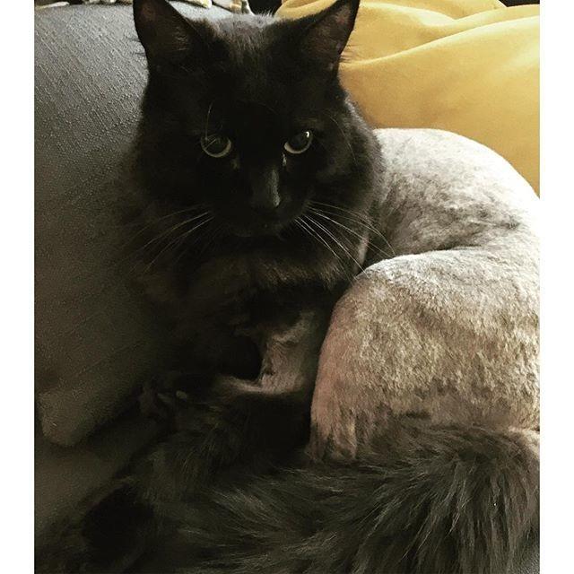 2.  животные, котт, кошка, прическа, стрижка