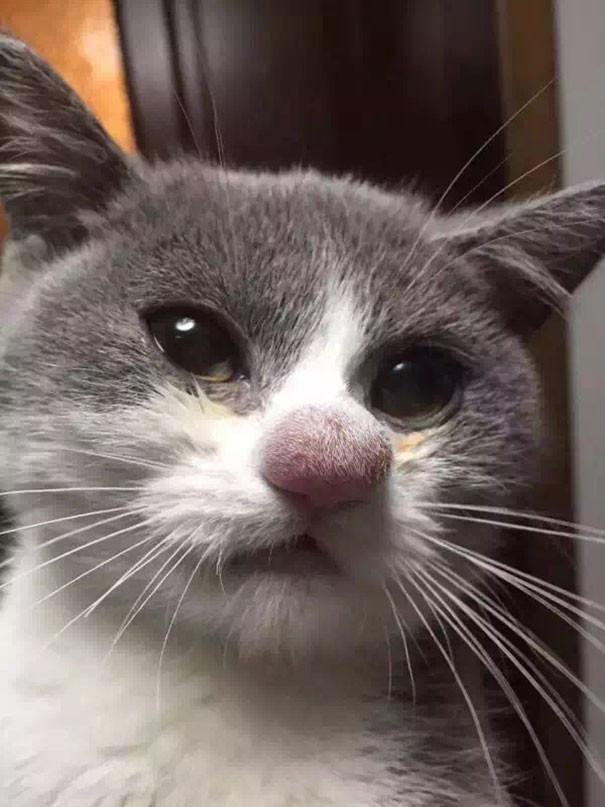 Не повезло: 20 ужаленных кошек, проигравших битву с пчелами животные, коты, пчелы