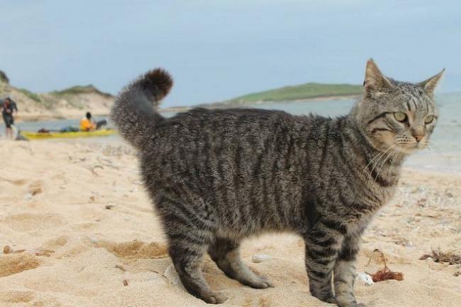 Кошачий пляж в Италии покорил тысячи туристов животные, коты, факты