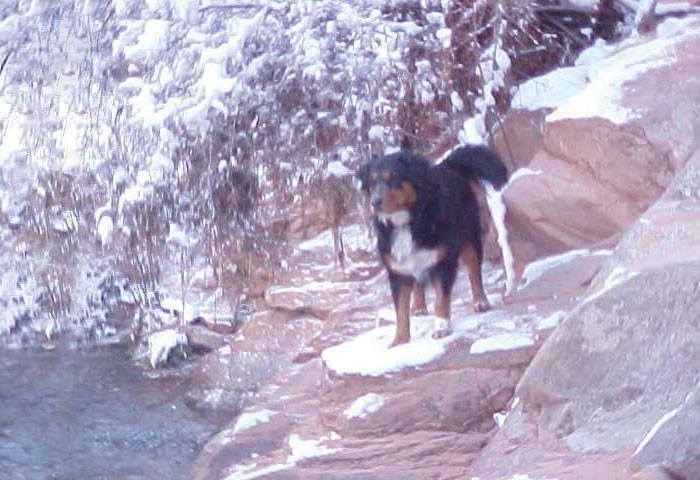 Без помощи Карли бы точно утонула  животные, незнакомец, собака, спасение