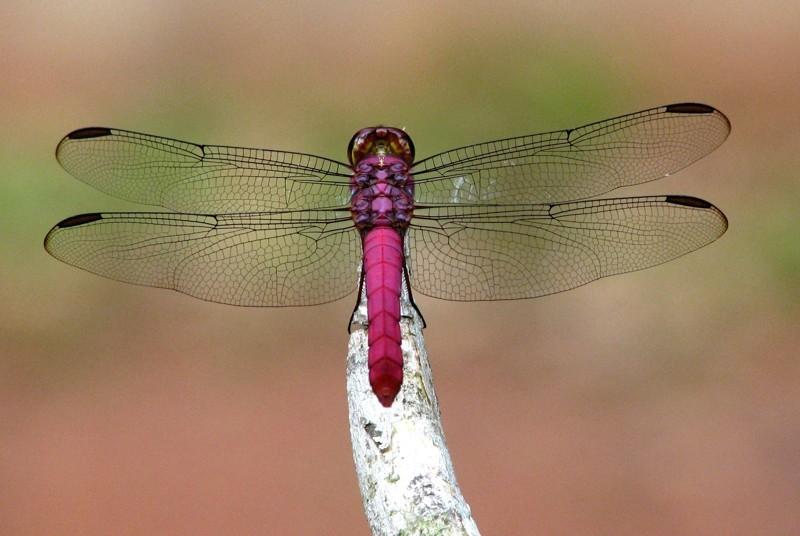 Розовый гламур: 17 животных необычного цвета животные, розовый, факты, фото