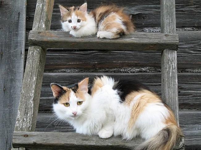 Им так удобно  котенок, кошка