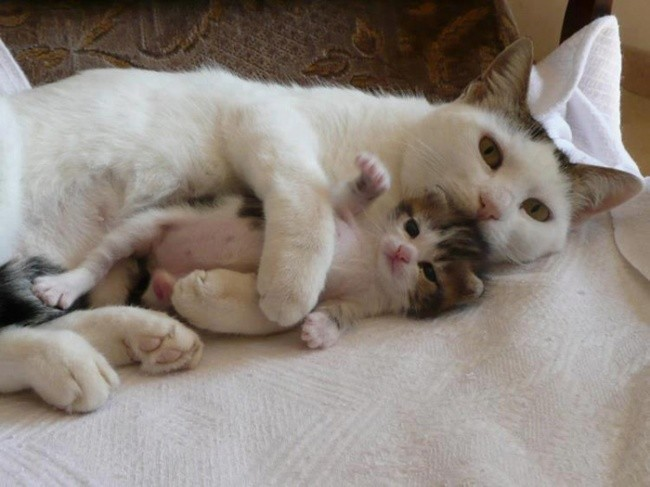 Время обнимашек и сна! котенок, кошка