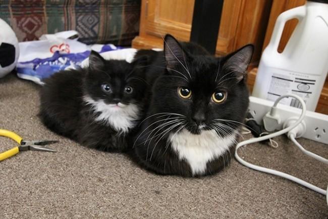 Будто брат и сестра  котенок, кошка