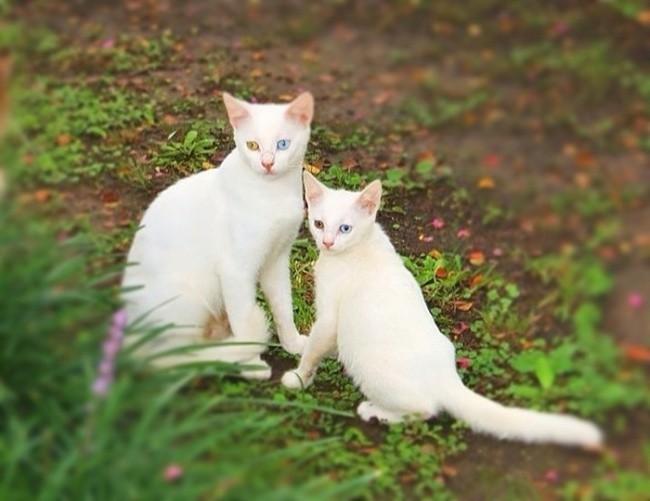 Будто зеркальное отражение друг друга  котенок, кошка