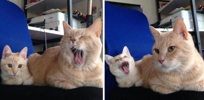 Теперь моя очередь! котенок, кошка