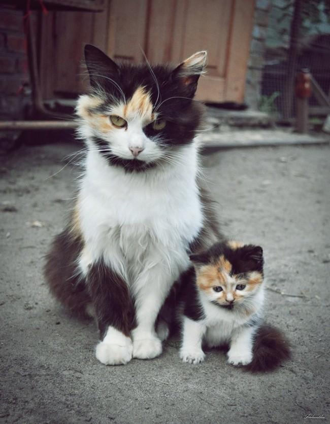 Осталось только научиться у мамы этому взгляду  котенок, кошка