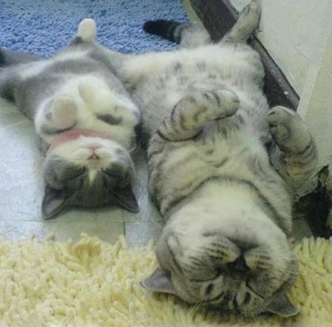 Сладкие сны котенок, кошка