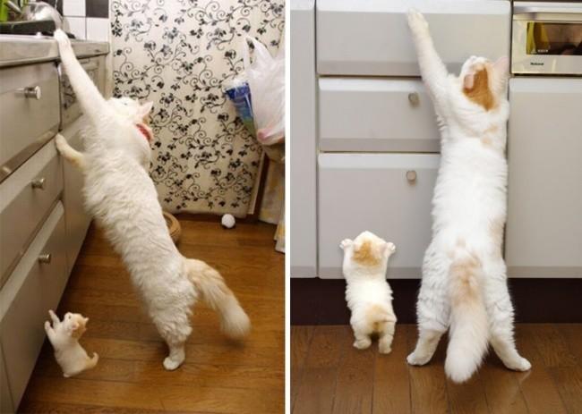Дотянуться до звезд  котенок, кошка