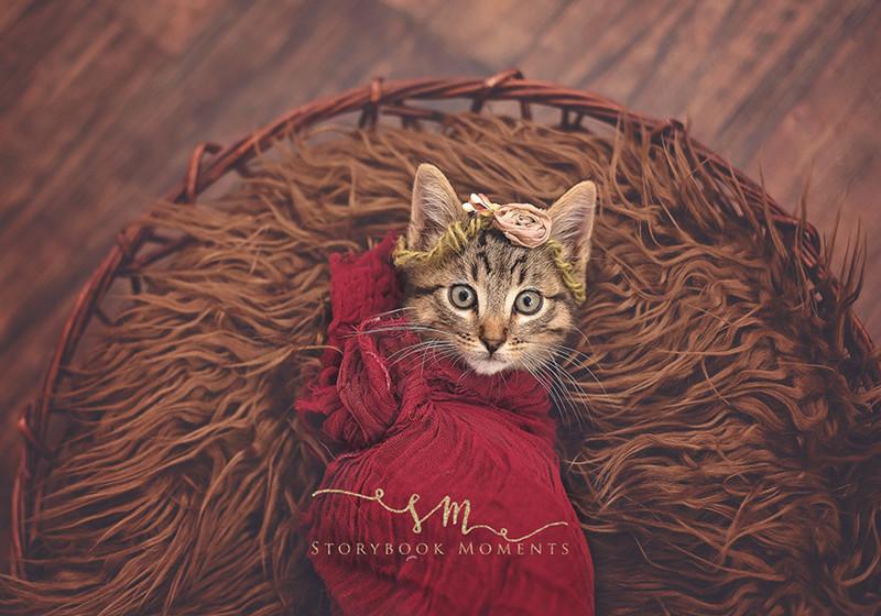 «Сначала это давалось нелегко, но стоило ее закутать, как она промурлыкала все оставшееся время» животные, коты, милота