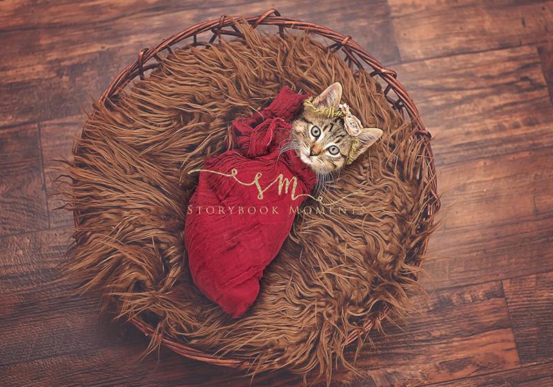 «Кто бы мог подумать, что кошкам нравится, когда их пеленают?» животные, коты, милота