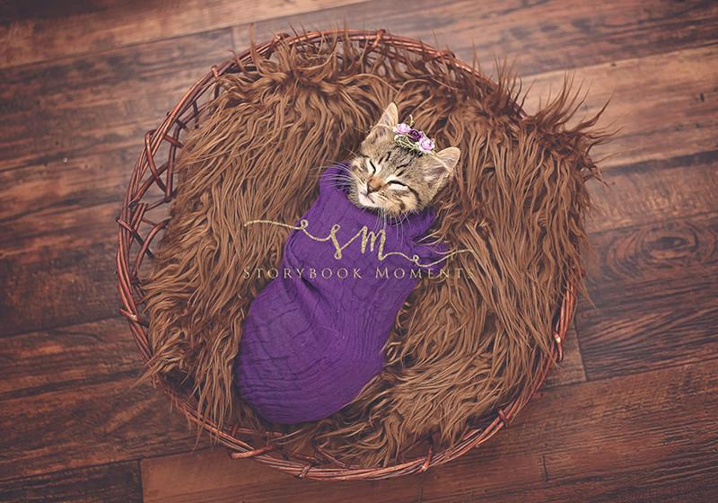 «Она появилась в нашей жизни недавно, просто бродячий котенок, который забрел к нам в гараж» животные, коты, милота