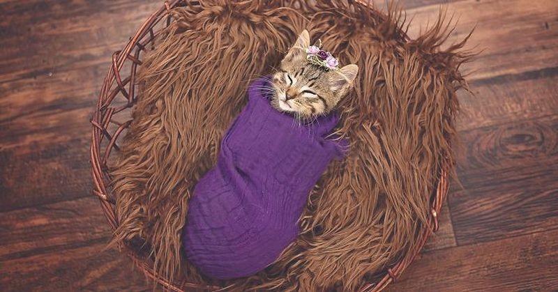 Девочка потребовала фотосессию для подобранного котенка, и мама не смогла отказать животные, коты, милота