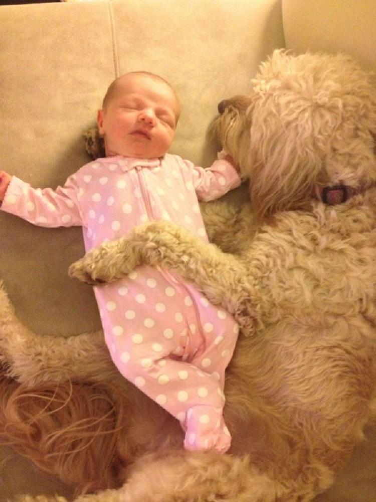 Родители оставили младенца с собакой дети, животные, собаки