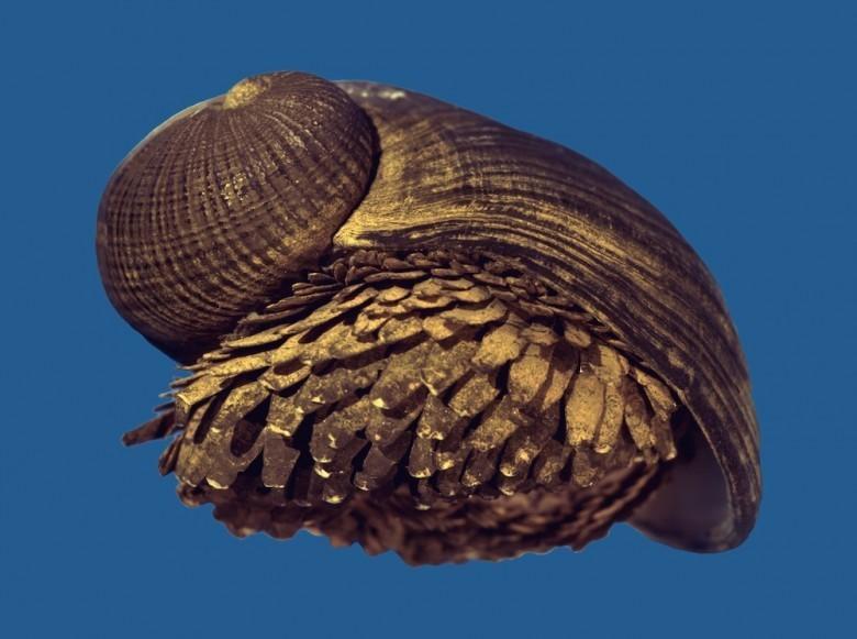 3. Crysomallon squamiferum животные, океан, существо