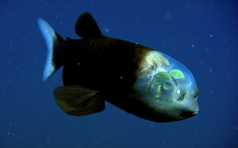 1. Малоротая макропинна животные, океан, существо