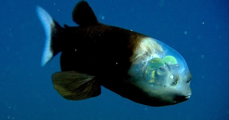 15 самых странных обитателей океана животные, океан, существо