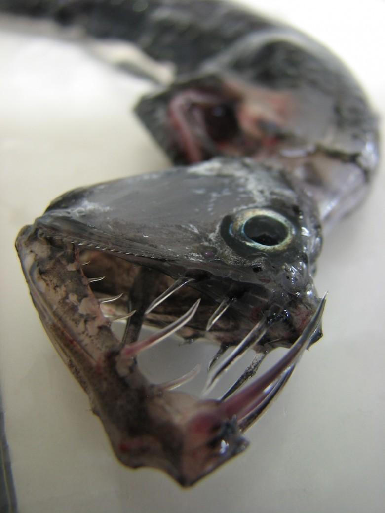 15. Хаулиод животные, океан, существо