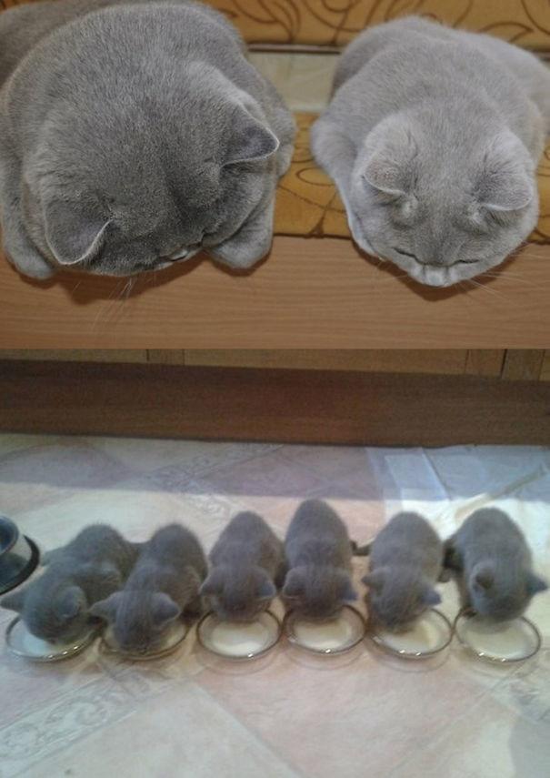 6. Пейте, малыши  животные, мама, фотография