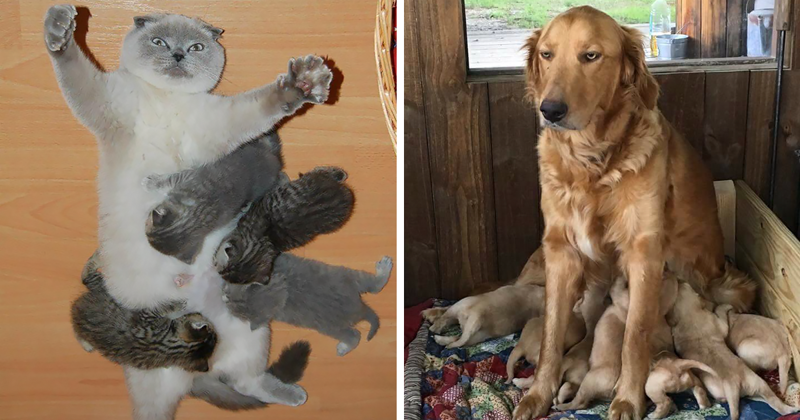 33 фотографии животных о том, каково это - быть матерью животные, мама, фотография