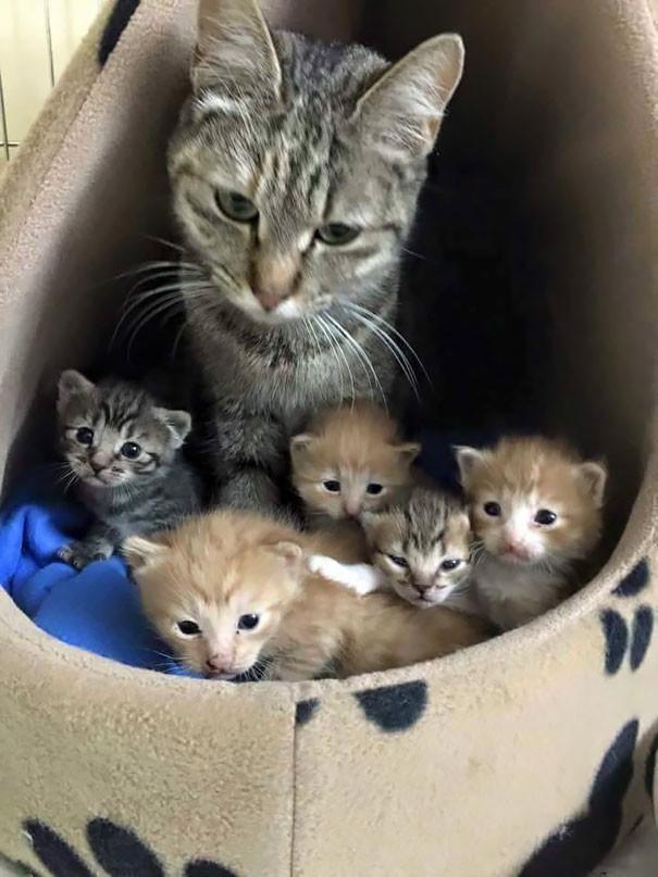 18. Ни минуты покоя  животные, мама, фотография