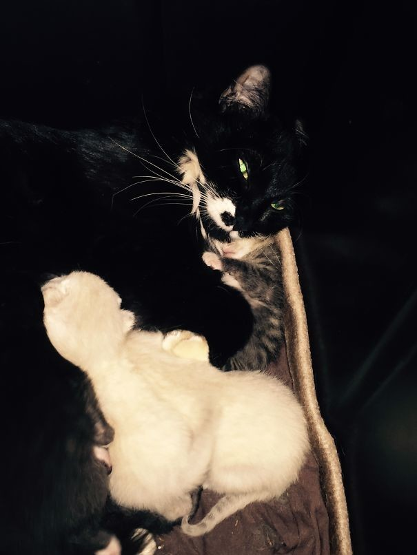 25. Шесть котят...  животные, мама, фотография