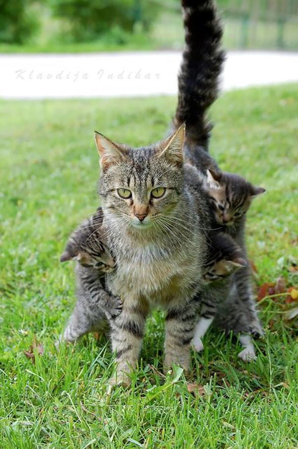 11. Тот момент, когда понимаешь, что больше детей не хочешь  животные, мама, фотография