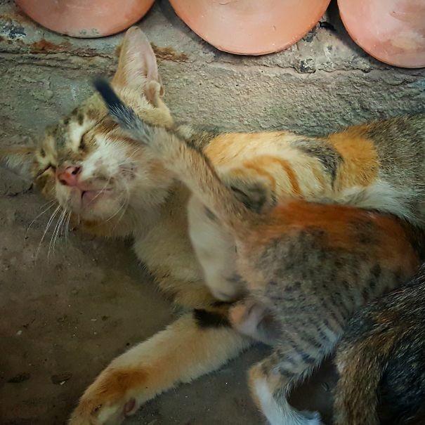22. На грани  животные, мама, фотография