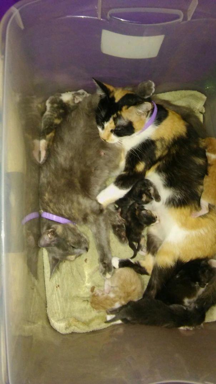 32. Две мамы-подружки с котятами  животные, мама, фотография