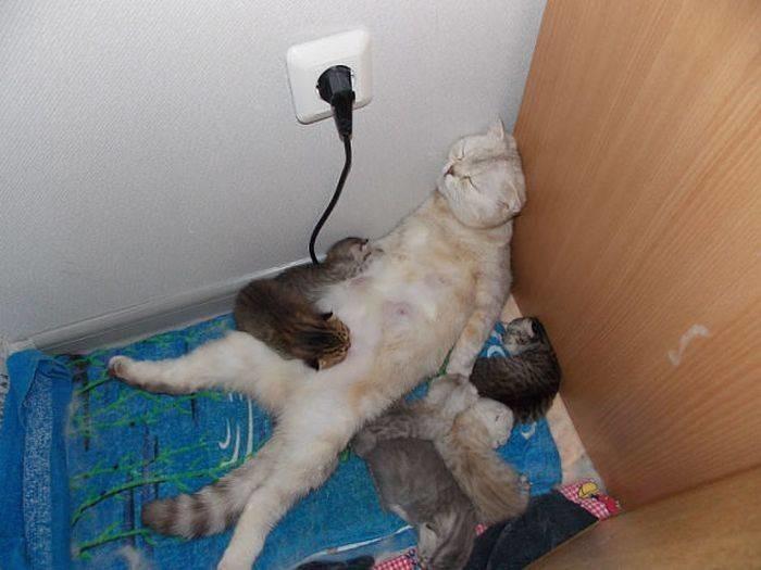 3. Мама спит, она устала  животные, мама, фотография