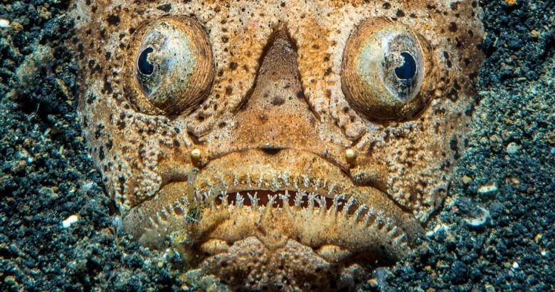 16 удивительных существ, обитающих в морских глубинах животные, обитатель, океан