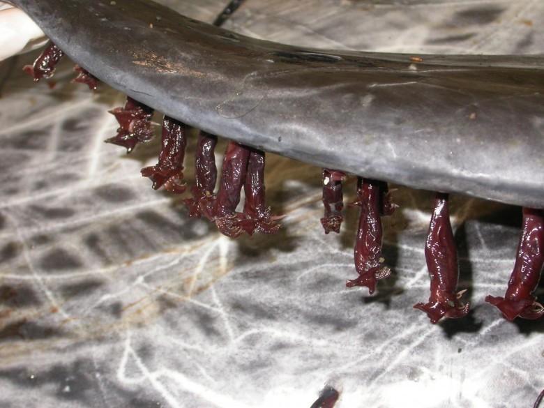 5. Усоногие животные, обитатель, океан