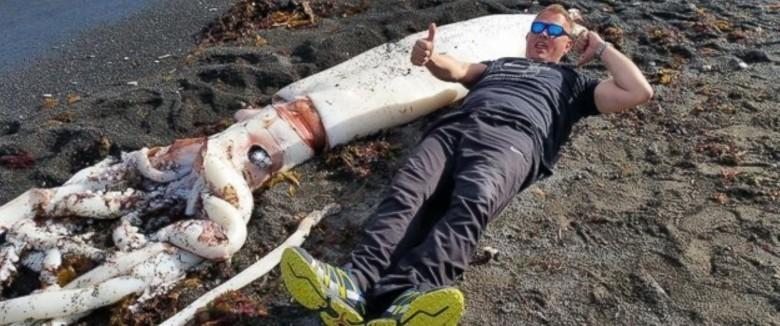 13. Гигантский кальмар животные, обитатель, океан