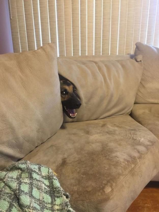 Открытки, картинки смешных собак с подписями