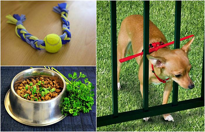 17 гениальных хитростей, которые будут полезны всем владельцам собак животные, собаки, советы, хитрости