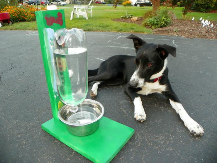 7. Поилка для собаки животные, собаки, советы, хитрости
