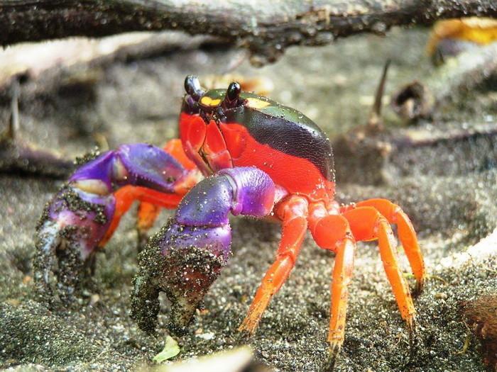 Животные необычных цветов животные, картинки, необычные животные, фото