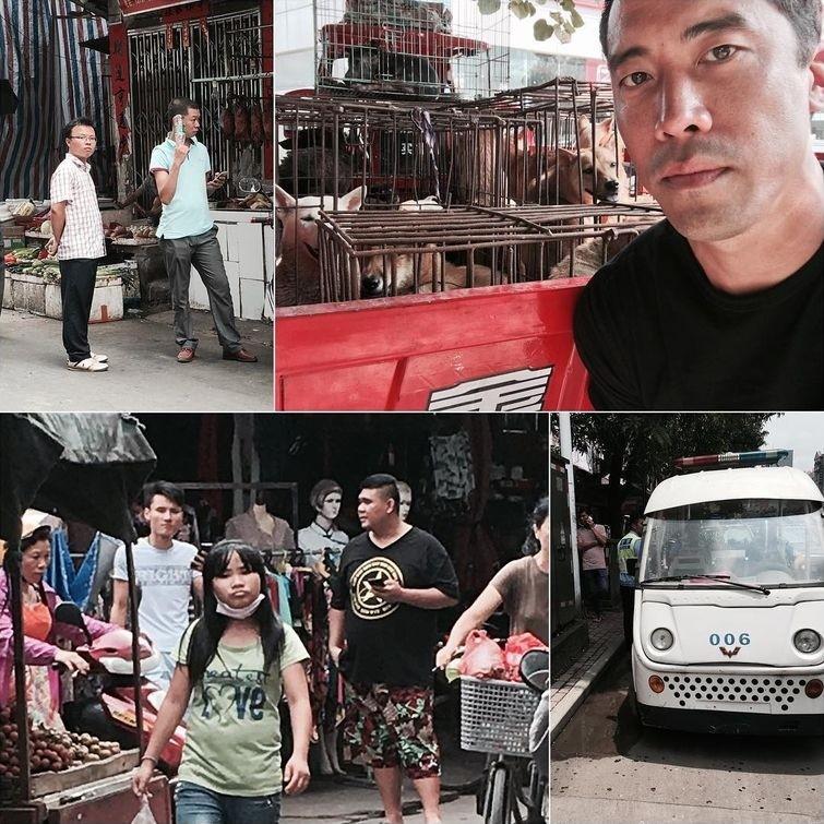 Этот парень спас около тысячи собак от смерти на ежегодном фестивале собачьего мяса в Китае видео, животные, собаки, спасение