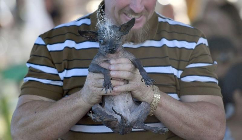 Официально названа самая уродливая собака в мире животные, самая уродливая собака в мире, собаки