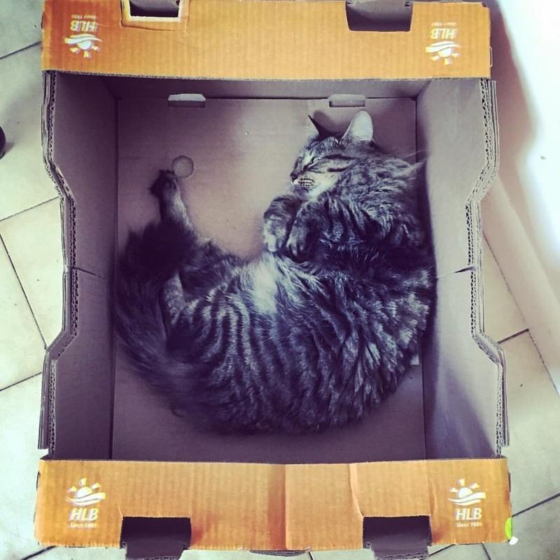 Пытаетесь дрессировать кошку? Расслабьтесь, это бесполезно! дрессировка, животные, кошки, психология животных