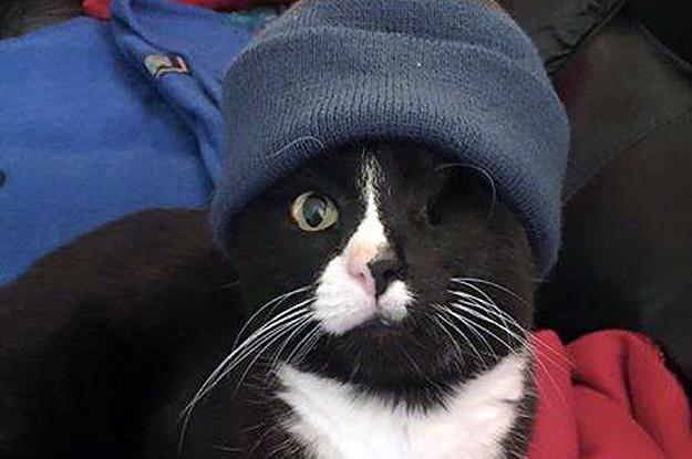 Этот кот-инвалид -  воплощение воли к жизни! животные, жить полной жизнью, здоровье, кошки