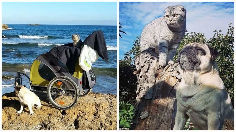 Неразлучная парочка: мопс и кот путешествуют по Испании инстаграмм, кошка, путешественники, собака