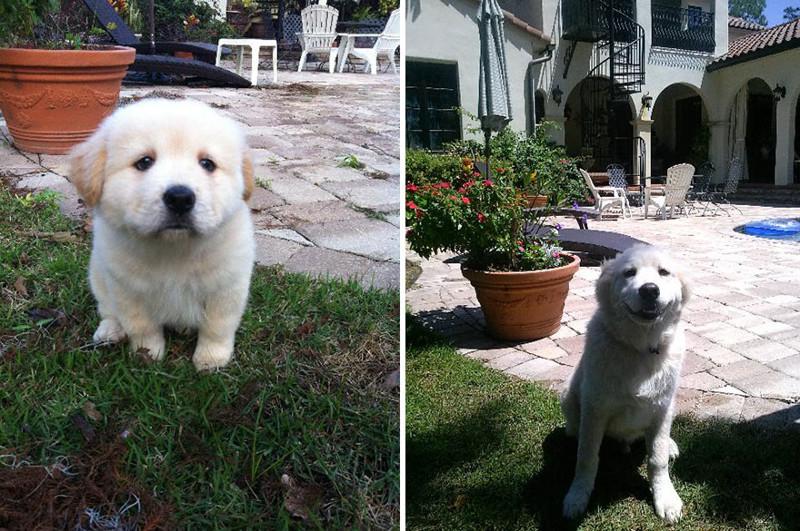 С возрастом стал больше улыбаться. животные, питомцы, тогда и сейчас