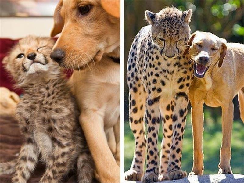 Двое друзей с самого детства. животные, питомцы, тогда и сейчас