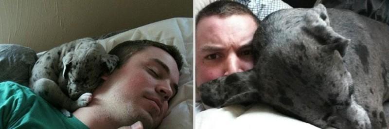 Всегда любил спать с хозяином. животные, питомцы, тогда и сейчас