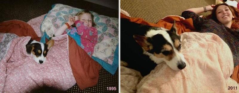 16 лет любви и преданности. животные, питомцы, тогда и сейчас